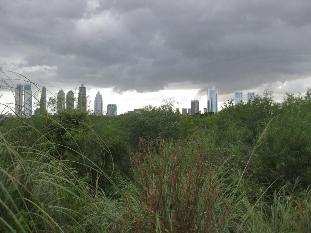 Kontrastreicher Blick über ein an die Stadt Buenos Aires grenzendes kleines Naturschutzgebiet. Hinter dem Betrachter der Fluß Río de la Plata