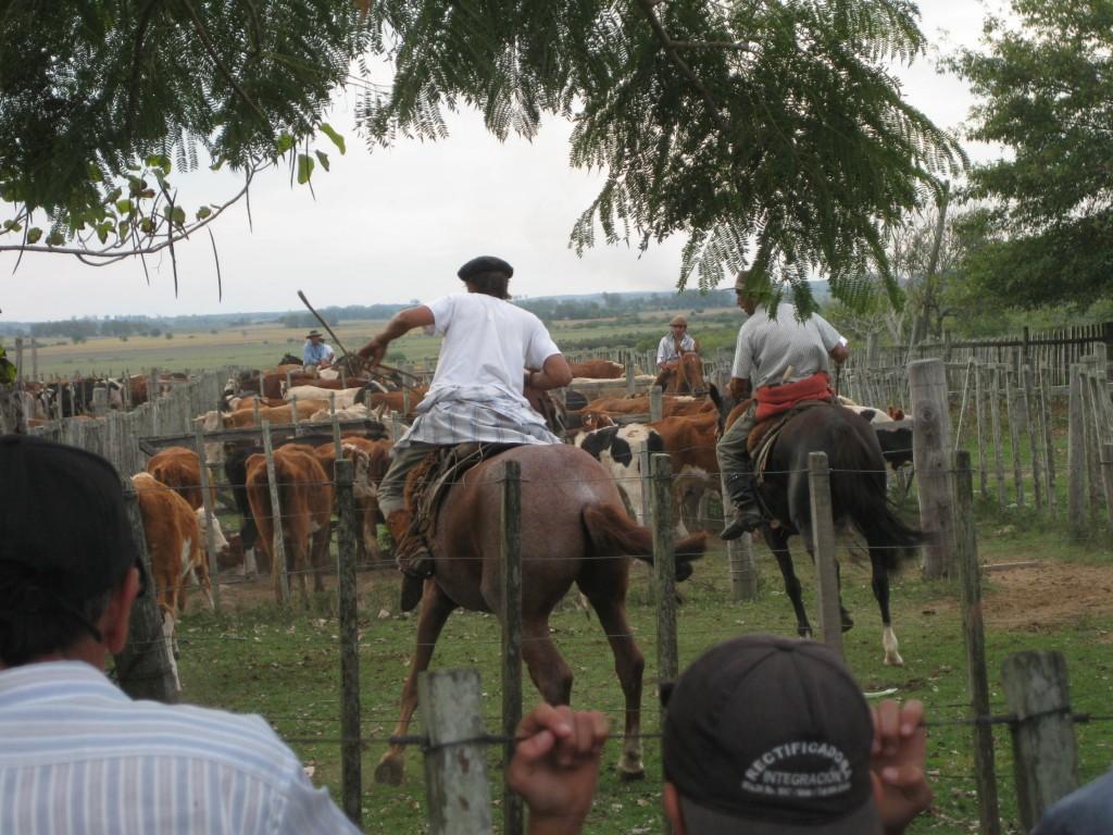 Uruguayische Gaucho-Kultur. Im Hinterland hatten wir Gelegenheit, bei einer Veranstaltung fürTier-Versteigerungen dabei zu sein