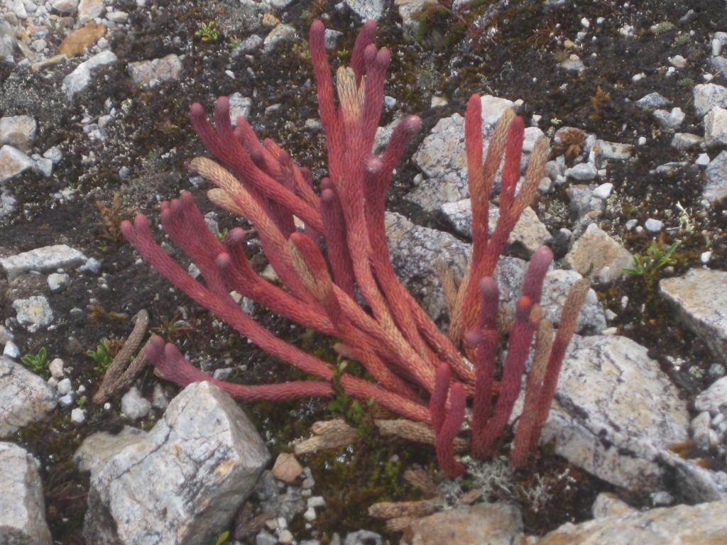 Flora und Fauna des Páramo auf mehreren Tausend Metern über dem Meer