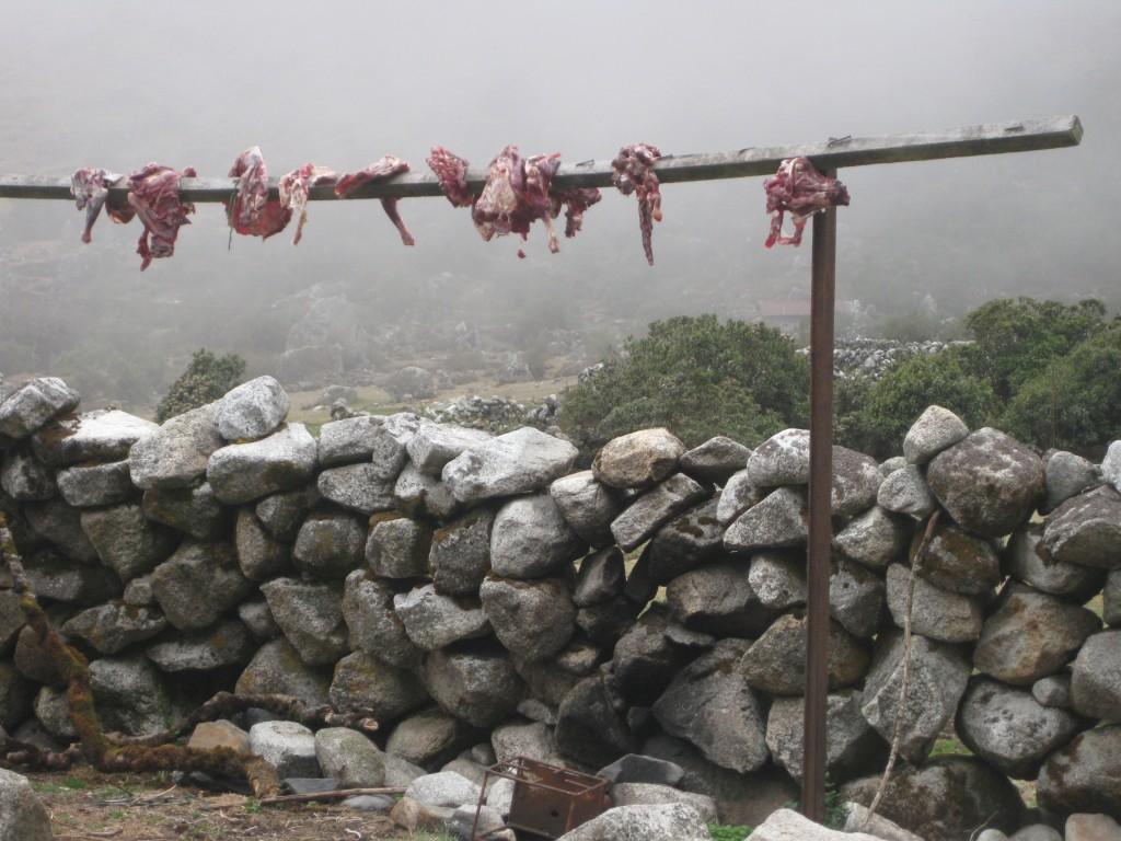 Fleisch zum Trocknen (und Lagern?) über eine Holzstange gelegt