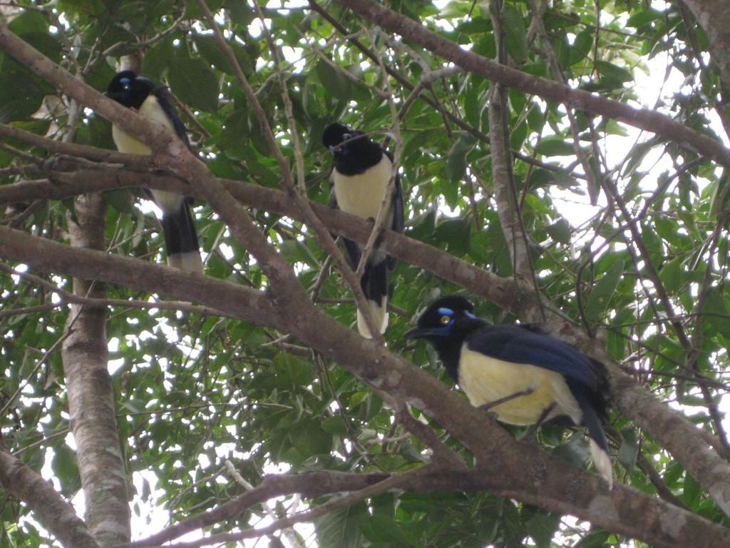 Bunte Vögel gibt's auch zu sehen