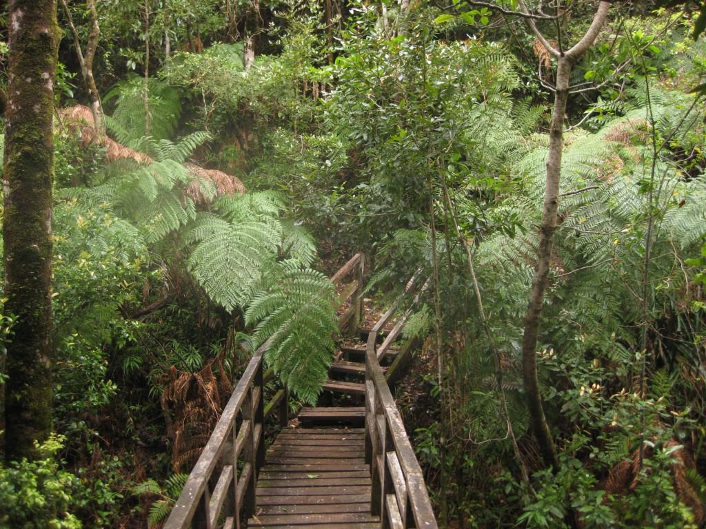 """Die Vegetation in der geschützten Küstenzone """"Punta Curiñanco"""""""