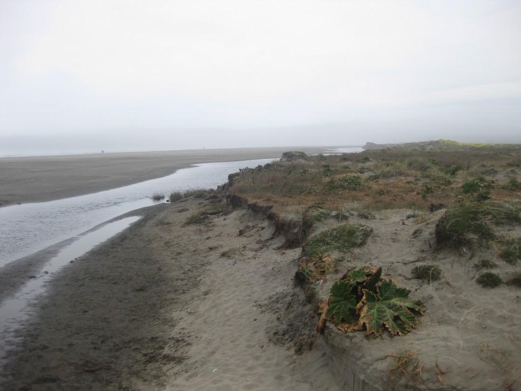 Im Nationalpark von Chiloé: Die raue Küste der Insel